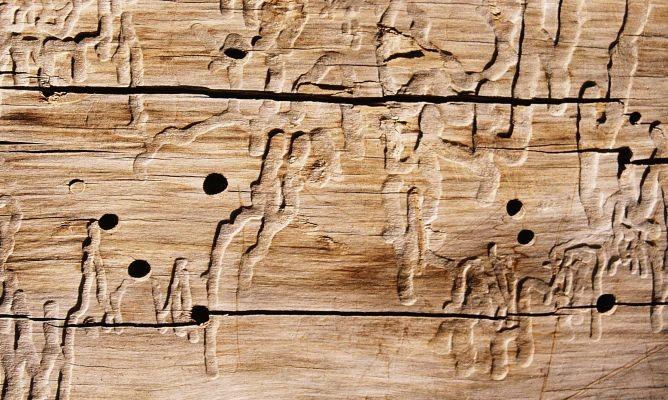 Instalaci n parquet madera exterior la carcoma pavimarc - Fotos de carcoma ...