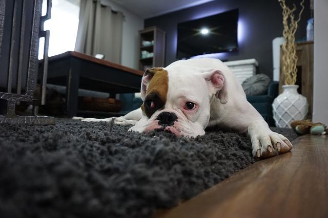 parquet mascotas